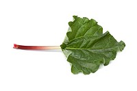 Fresh Rhubarb stalk and leaf on white background