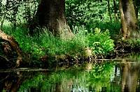 Lichtspiel , Spree Forest