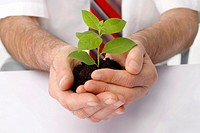 Close-up of a businessman´s hands cup a green plant