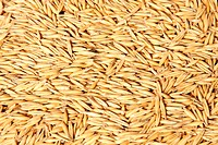 A Texture of oats seeds