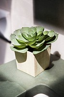 Close_up of a succulent plant growing in a pot