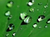 Makroaufnahme von Regentropfen auf einem Blatt.