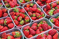 Lots of delicious strawberries