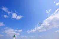 Seagull flying , Yokohama, Kanagawa Prefecture, Honshu, Japan