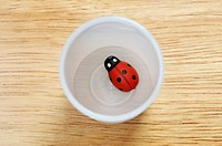 Fake Ladybird On Water Cup