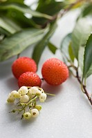 Arbutus berries and flowers