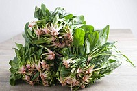 Bunches of fresh spinach