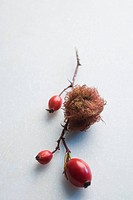 Rosehips and dried moss