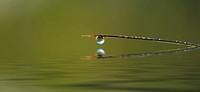 Wassertropfen auf einem Ast, der sich im Wasser spiegelt