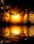 nebeliger Sonnenaufgang im Wald