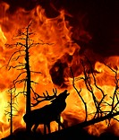 vector illustration of the deer running away from fire in wood