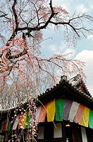 Kyoto (Japan): Buddhist temple by the Daigoji temple