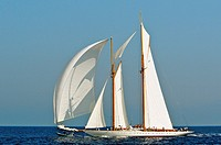 France, Var 83, Saint-Tropez, Les Voiles de Saint-Tropez meet every year in late September of beautiful classic yachts competing in regattas superb he...