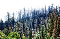 Las Conchas forest fire damage