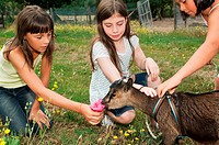 Three girls with goat kid
