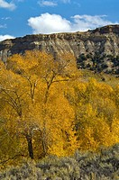 Fall colors on trees below butte along scenic state route 120, near Cody, Wyoming