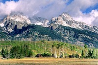 Wood barn and aspen trees under the Teton Range, dusted by first fall snow, Grand Teton Nat'l  Pk , WYOMING