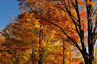 Autumn foliage along Monument Road, Manitoulin Island, Ontario, Canada