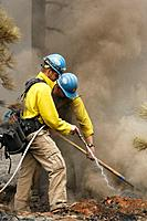 Wildland fire fighters- mop up