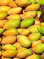 Mangifera indica L., Totapuri Mangoes
