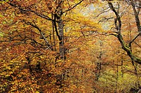 Autumn Landscape Natural Park Saja Nansa, Cantabria, Spain.