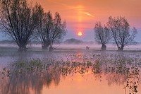 Spring floodwaters of Biebrza River, sunrise, Biebrza National Park, Poland, Europe