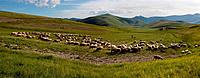 Panorama view of herd of sheep with shepherd in Piano Grande meadow, surrounded by mountains, late afternoon spring sunshine and blue sky, Umbria, Ita...
