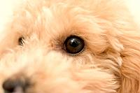 Close_up of dog