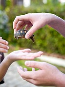 kids share the turtle
