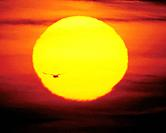 Sun and silhouette of bird flying