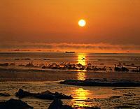 Sunrise over drift ice, Shibetsu_machi, Hokkaido, Japan