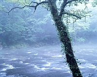 Mountain stream and tree. Kumamoto Prefecture, Japan