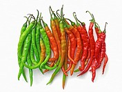 Red and Green Common Chilies, Capsicum annuum