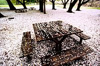 Petals of cherry flowers fallen on table and bench, Kinuta park, Tokyo prefecture, Japan