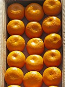 Orange fruits at Market