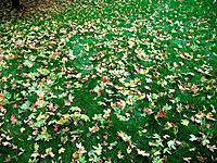 Autumn leaves of different color lay on a green grass 3