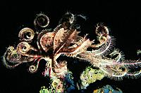 Crinoids,are also known as sea lilies or feather_stars,are marine animals that make up the class Crinoidea of the echinoderms. They live both in shall...
