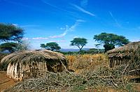 Traditional Maasai house,homestead. Boma. View of landscape. Trees.