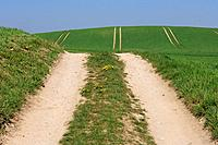 Dirt road and tracks in field in background, spring. Mecklenburg_Western Pomerania, Germany, Europe.