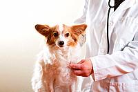 a dog getting a medical check up by a veterinarian.