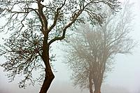 trees on winters day
