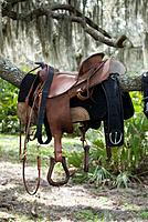 Western saddle resting over a tree branch in the woods.