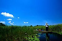 The Okavango Delta is a wilderness area where a thousand kilometers of river are absorbed into the sands of the Kalahari. The wetlands support a huge ...