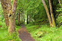 Aros Park near Tobermory, Isle of Mull, Argyll and Bute, Scotland