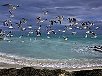 Turquoise waters and a flock of gulls express the essence of tropical experience