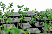 shoots growing through keys of computer keyboard - symbolism of nature is striking back