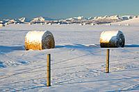 snow_covered hay bales, okotoks, alberta, canada