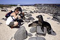Tourist photographing Galapagos Sea Lion, Zalophus wollebaeki, North Seymour Island, Galapagos, Ecuador