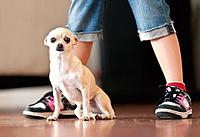 a small dog sitting at a person´s feet, benalmadena costa malaga andalusia spain