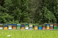 Coloured artificial beehives made of wood